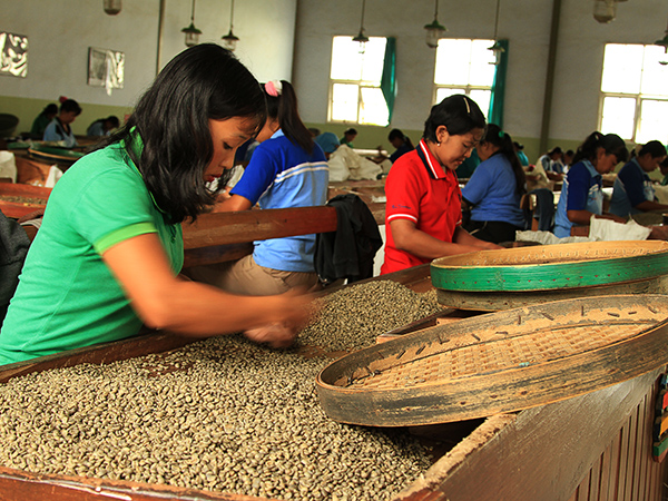 Sorting out coffee beans...